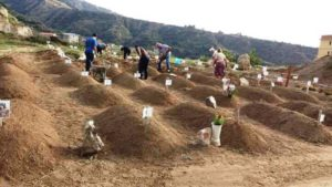 cimitero immigrati