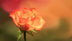 sei bella. E non per quel filo di trucco. rosa arancione orangetheworld 25 novembre