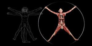 Real Bodies, oltre il corpo umano