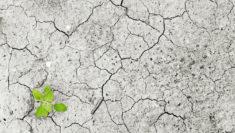 Crisi climatica globale, Greenpeace «Il Governo segua l'esempio di Mattarella»