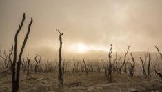 cambiamento climatico minaccia ai diritti umani Philip Alston