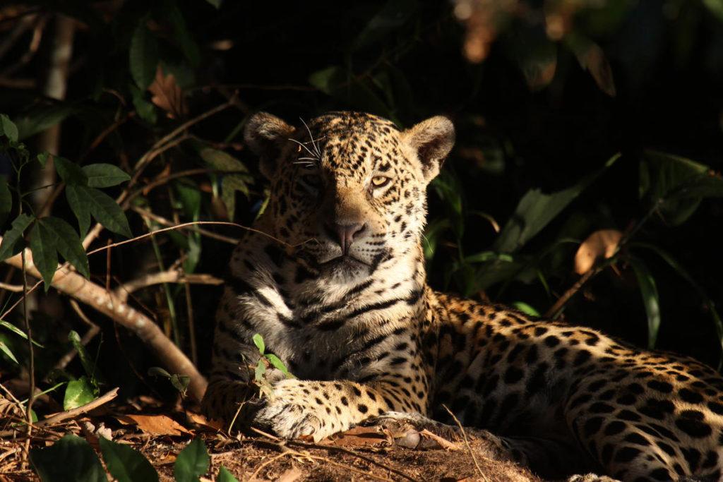 Gran Chaco Seconda foresta tropicale dell'America Latina, dopo Amazzonia, deforestata per la produzione della carne