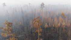 Una squadra di Greenpeace Russia ha documentato i massicci incendi che stanno interessando la Grande foresta del Nord nella regione di Krasnoyarsk in Siberia. (2)