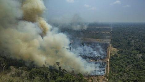 Incendi Amazzonia Brasile denuncia Greenpeace (2)