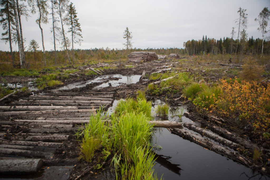 Foresta protetta Russia riserva naturale Dvinsko-Pinezhsky