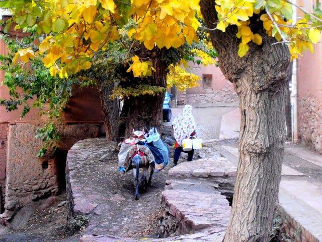 Donna con asinello. Abianeh, Iran