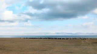 Lago Son Kol. Sullo sfondo i monti del Tien Shan - Kirghizistan