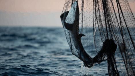 """""""Muri della morte"""", Greenpeace_ pratiche di pesca distruttive minacciano l'Oceano Indiano"""